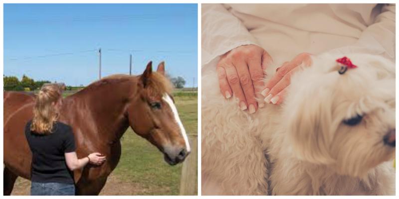 6 aspectos que necesitas saber para dar Reiki tu mascota