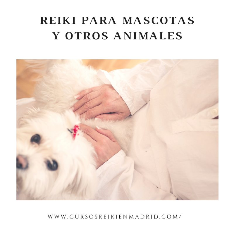 Tratamiento de Reiki para mascotas y animales