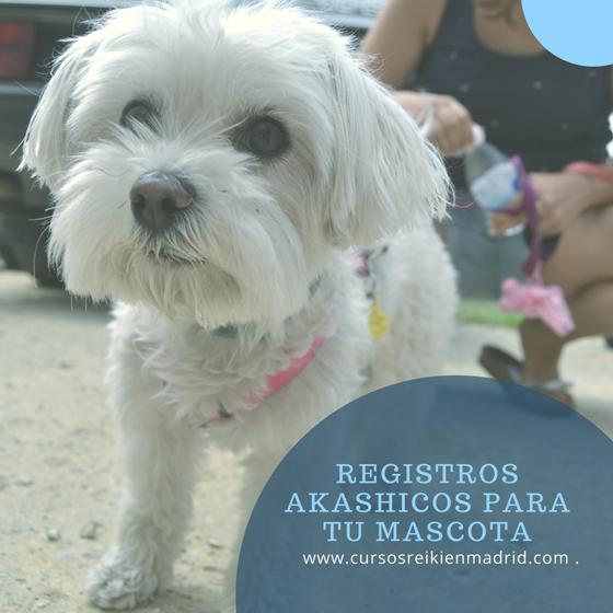 Registros Akashicos para mascotas