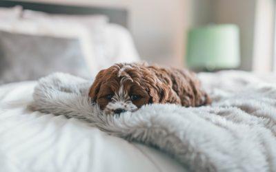 ¿Sientes cansancio después de una sesión de Reiki?